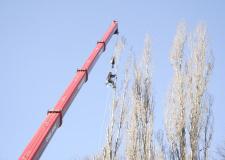 Снимка на арборист кастрещ дърво