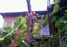 Снимка на арборист режещ дърво