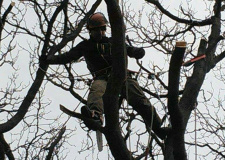 Photo of a working arborist