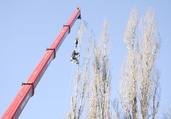Tree cutting with crane (photo)