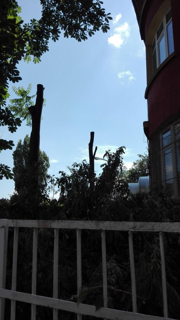 Дърво в авариен вид  (снимка)