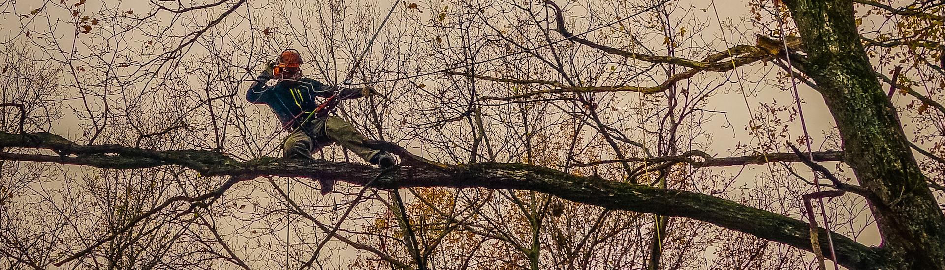 Снимка на арборист на дърво